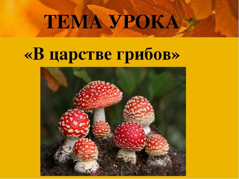 ТЕМА УРОКА «В царстве грибов»