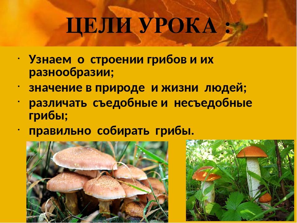 ЦЕЛИ УРОКА : Узнаем о строении грибов и их разнообразии; значение в природе и...
