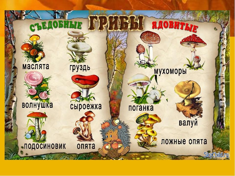 А знаете ли вы грибы?