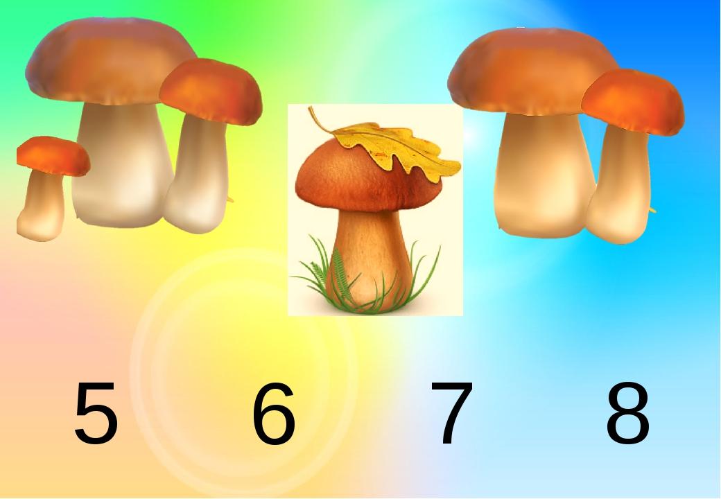8 5 6 7