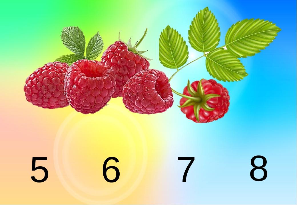 5 6 7 8