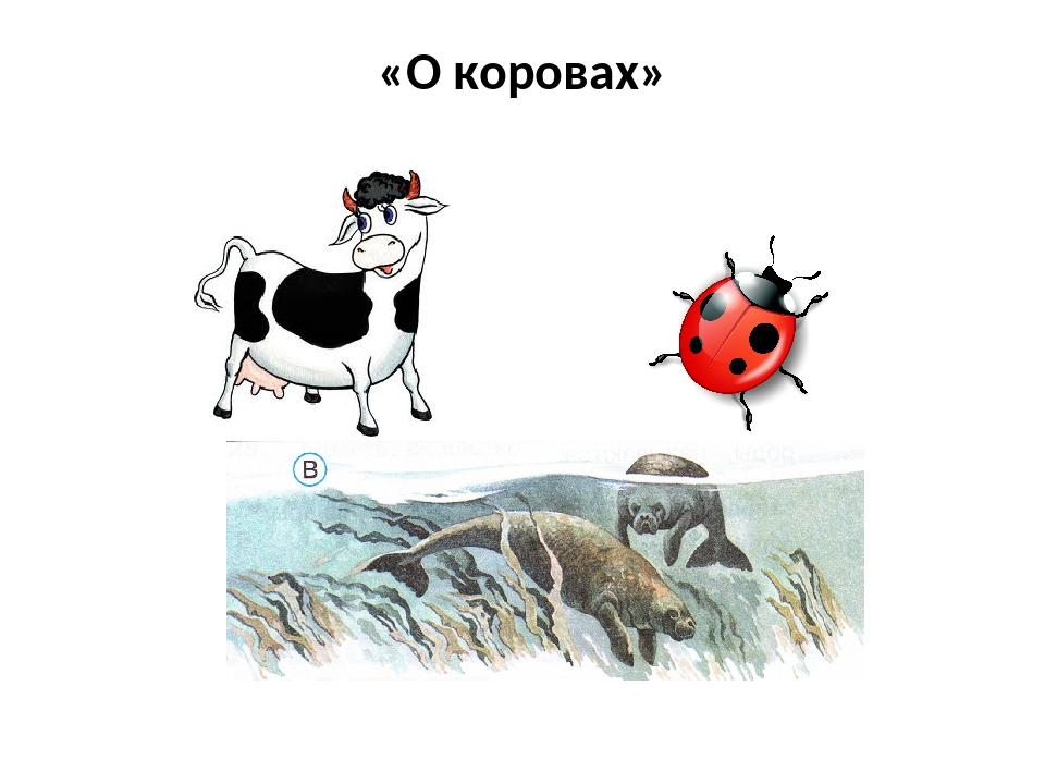 «О коровах»