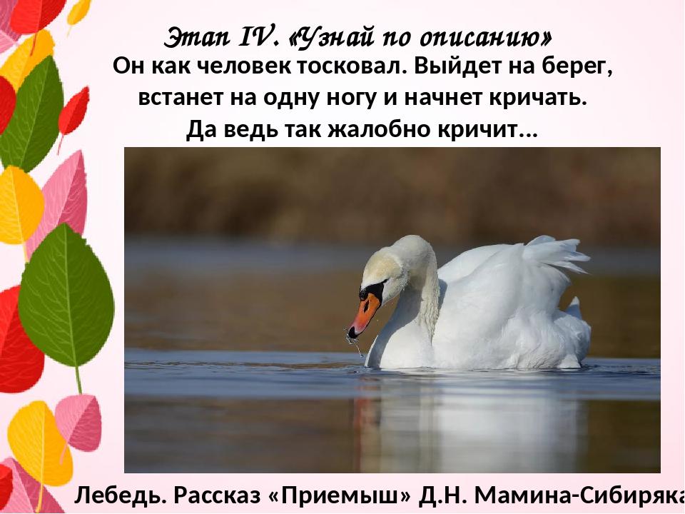 Этап IV. «Узнай по описанию» Он как человек тосковал. Выйдет на берег, встане...