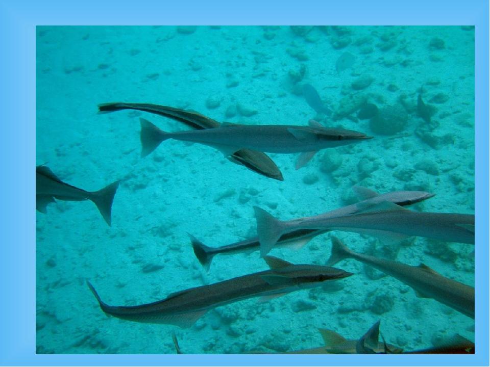 Ментавайские острова Общая площадь островов составляет 6700 км², а население...