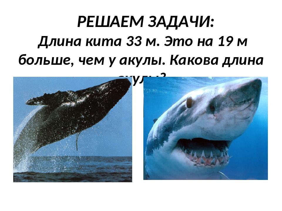 РЕШАЕМ ЗАДАЧИ: Длина кита 33 м. Это на 19 м больше, чем у акулы. Какова длина...