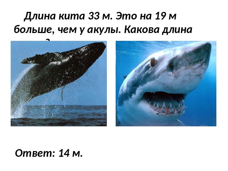 Длина кита 33 м. Это на 19 м больше, чем у акулы. Какова длина акулы? Ответ:...