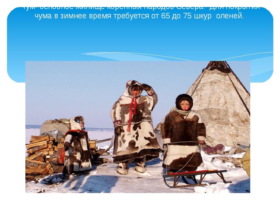 Чум- основное жилище коренных народов Севера. Для покрытия чума в зимнее врем...