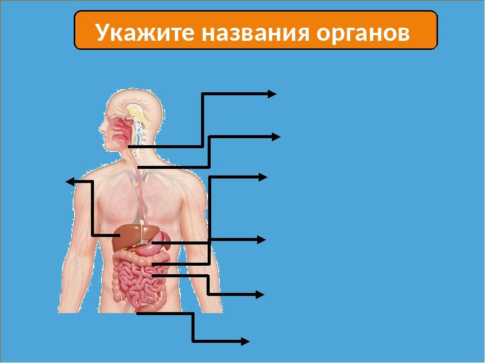 Укажите названия органов