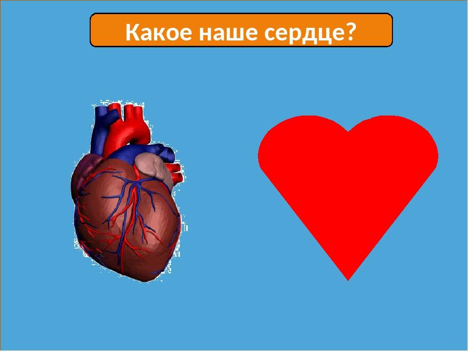 Какое наше сердце?