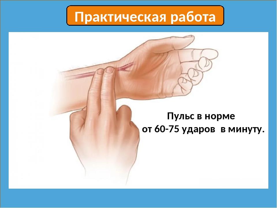 Пульс в норме от 60-75 ударов в минуту. Практическая работа